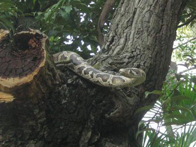 造り物のヘビ